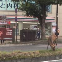 奈良!!鹿!!!
