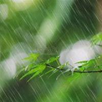 雨続き………